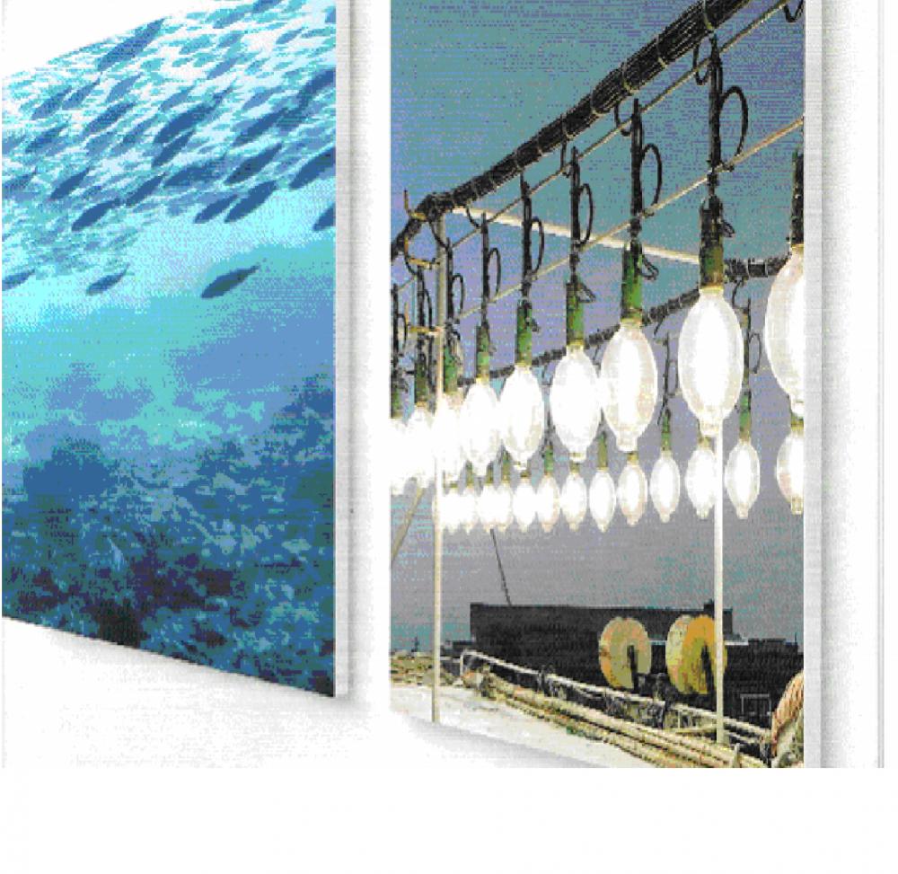 Bóng đèn đánh cá